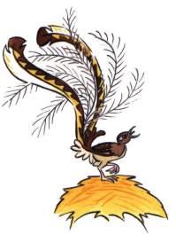 Australian animals and birds raskraska pictures free for kids